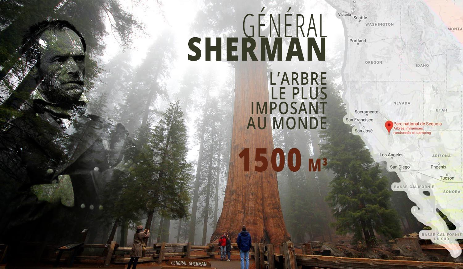 General-Sherman-Sequoia géant