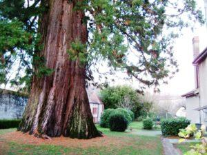 sequoia-geant-france